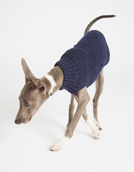 Dogs life sweater 5