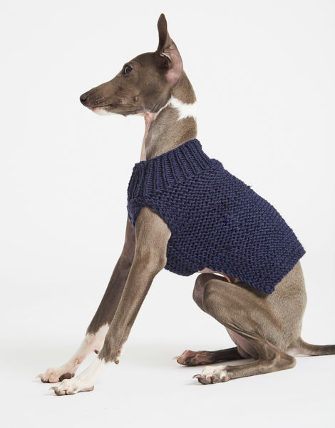 Dogs life sweater 1 index