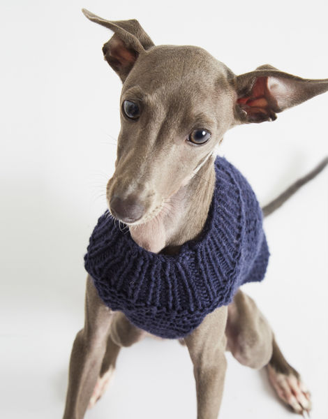 Dogs life sweater 7