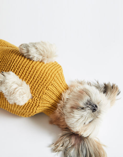 Dogs life sweater 15