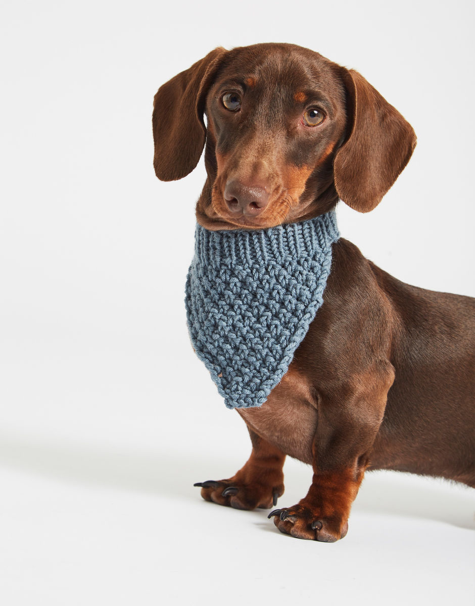 Hound Dog Bandana Wool And The Gang
